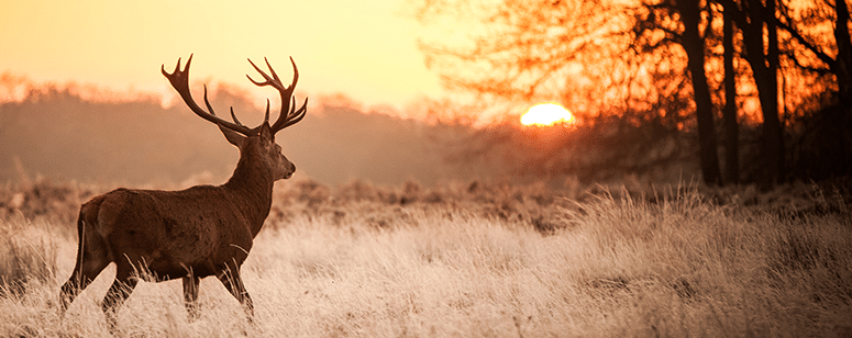 deer hunt during dusk and dawn
